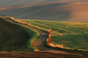 Road in the fields with rusty ripples fields in the background in the evening sun