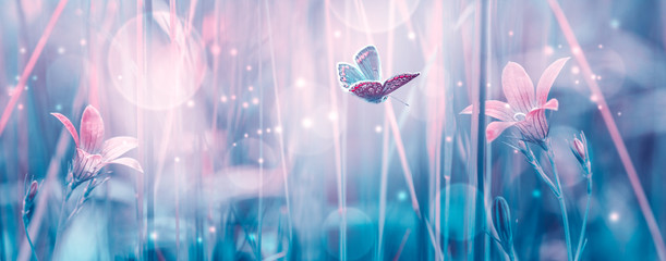Aluminium Prints Panorama Photos Dreamy spring bellflowers bloom, butterfly close-up, sunlight panorama. Spring floral mixed media art. Delicate artistic toned image. Pastel blue pink toned. Macro with soft focus. Nature background