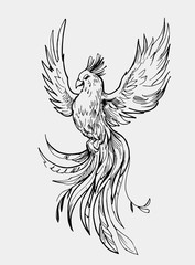 Phoenix. Firebird. Great for print, tattoo sketch. Outline with transparent background. Hand drawn illustration converted to vector