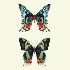Beautiful vector watercolor summer colourful butterfly set. Hand drawn clip art. Beauty of nature. Transparent background. Isolated objects,