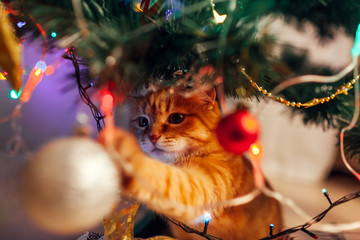 Ginger cat sitting under Christmas tree and playing with toys and lights. Christmas and New year concept