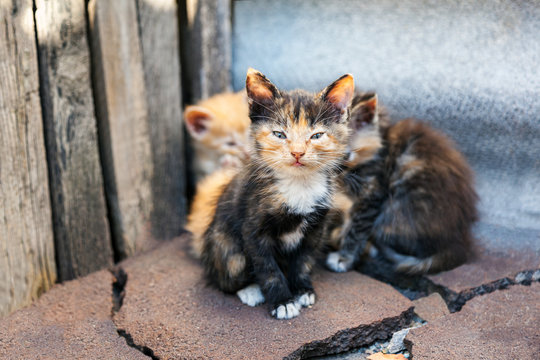 A small kitten from a small flock of homeless street kittens looks with care. Homeless abandoned animals alone with themselves. A flock of stray cats on a city street.