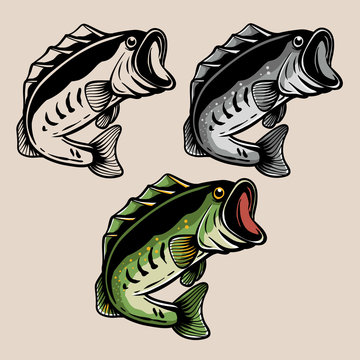 Fishing logo. Bass fish isolated on colour. Largemouth bass fish for tshirt design, sticker, or emblem. Fish coloring page