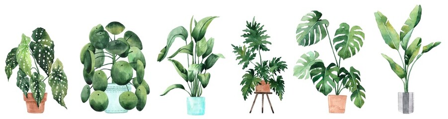 Watercolor image with tropical leaves and leaves of indoor plants. Home plant in pots. Greenery. Juicy. Floral design element. Perfect for invitations, cards, prints, posters.