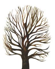 disegno albero senza foglie su sfondo bianco