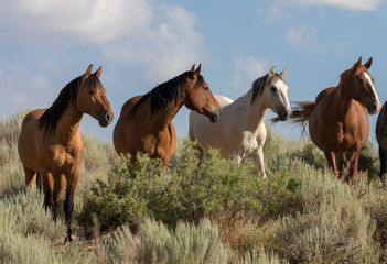Wild Horses in Summer in Sand Wash Basin Colorado Wall mural