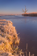 Fototapete - Lonely tree in winter at sunrise in The Netherlands