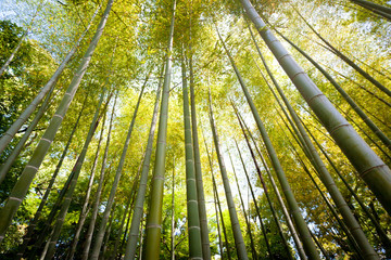 Beatiful bamboo forest in Tokyo