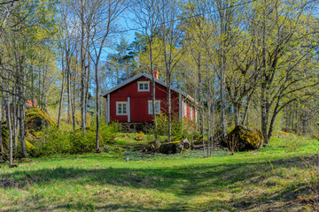 A traditional white and red scandinavian house in the background with a springtime forest scenery on a sunny day.