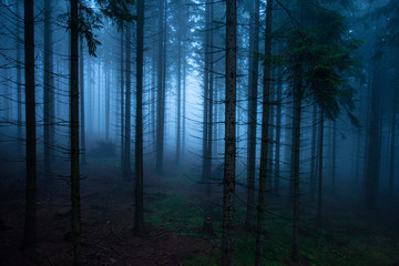 Fotobehang Bossen an old foggy forest - autumn