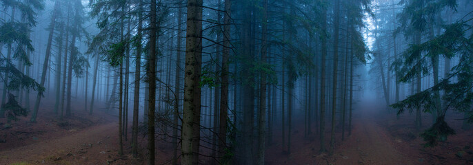 an old foggy forest with paths - autumn