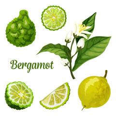 Bergamot orange fruit slice, kaffir lime plant