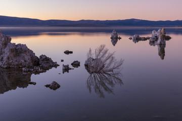 Mono lake tufa and tree reflection at sunrise, California