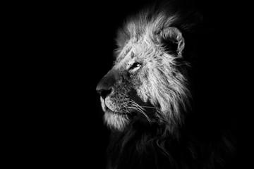 Self adhesive Wall Murals Lion Big Cat