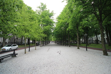 Trees and stones on the innerlane of the royal road Lange Voorhout in The Hague, the Netherlands