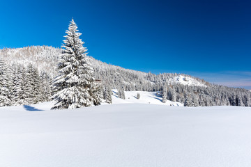beautiful snowy landscape during winter with blue sky