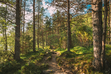 Fototapeten Straße im Wald Kinsarvik, Hordaland, Norway. Beautiful Summer Coniferous Forest In Sunny Day. Green Pine Woods In Forest Landscape. Hardangervidda Mountain Plateau