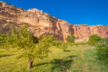 Apple, pear and peach trees in a lush orchard in a canyon, Capitol Reef National Park, south-central Utah, USA