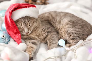 Cute funny cat in Santa hat lying on soft plaid