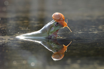 Foto op Canvas Flamingo snail above the frog's head