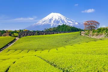 Wall Mural - 富士山と茶畑、静岡県富士市大渕にて
