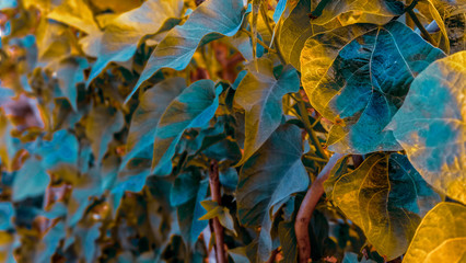 High quality landscape of a group of leaves in light blue color