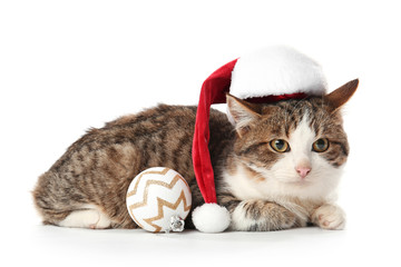 Cute funny cat in Santa hat and with Christmas ball on white background