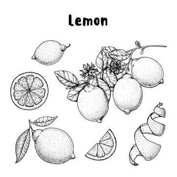 Lemon hand drawn collection, graphic elements. Vector illustration. Lemon sketch for menu design, brochure illustration. Black and white design. Citrus lemon pattern illustration.