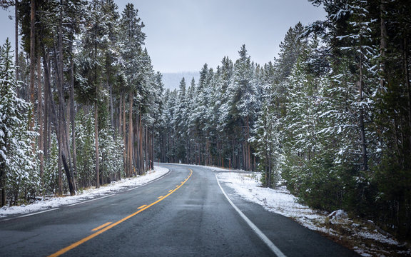 On the road of Yellowstone in Winter