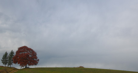 Clouds surround an autumnal tree on a rainy day near Holzkirchen