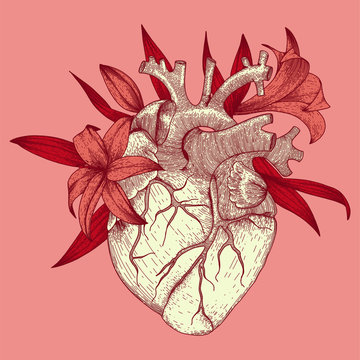 Vector illustration of anatomy heart with lily flowers for t-shirt print for st. valentines day