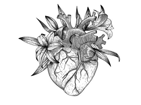 Vector realistic heart with lily flowers . Anatomy human organ image for t-shirt print