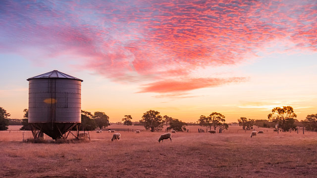Sunset over a sheep farm in outback Victoria Australia