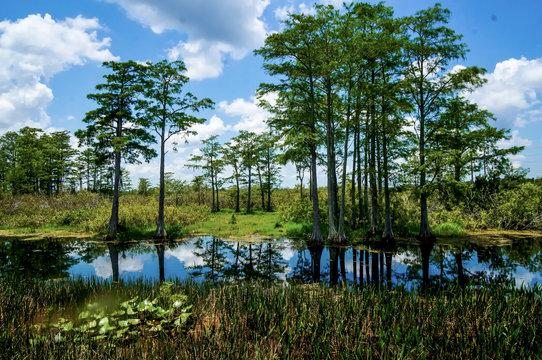 Louisiana Cypress Swamp and river