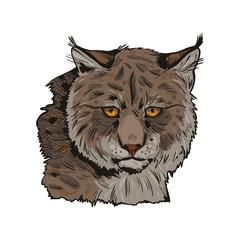 Door stickers Hand drawn Sketch of animals Eurasian lynx isolated vector illustration. Vector hand drawn wild animal sketch icon. Color drawing of medium-sized wild cat animal portrait. Northern lynx-lynx, Turkestan, Caucasian hunting season