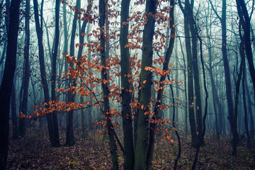 misty morning in autumn forest