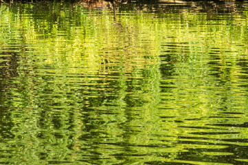 Reflection of green nature in water.
