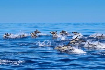 Delfin Gruppe im Atlantik