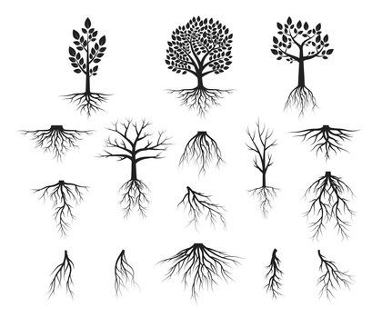 Vector isolated Illustration of big set of trees with roots, forest plant silhouettes.