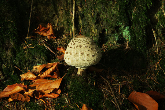 Pilz im Herbstlicht