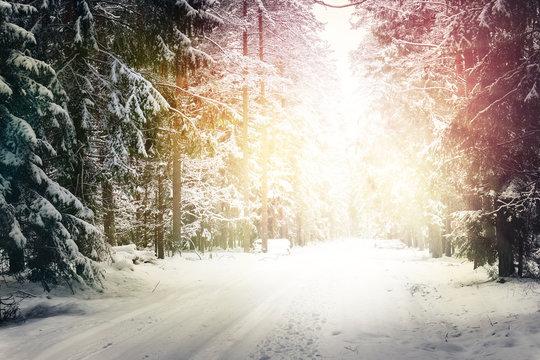 road in winter forest in sunlight.