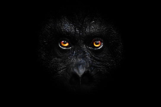 orange luminous eyes on the black face of a monkey in a black night, a frightening look that embodies fears and phobias.