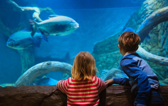 little boy and girl watching fishes in aquarium