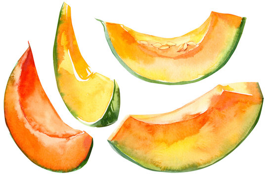 pumpkin slices vegetables on isolated white background, watercolor illustration
