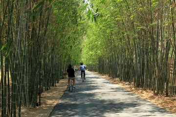 Popular attraction in thailand to take pictures and relax place, Tourists ride bicycle along the path between bamboo arches.