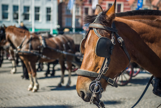 Horse in the market square with blinders blinkers on tourism in Belgium bruges europe european western brown light horse for transportation and entertainment of tourists animal cruelty