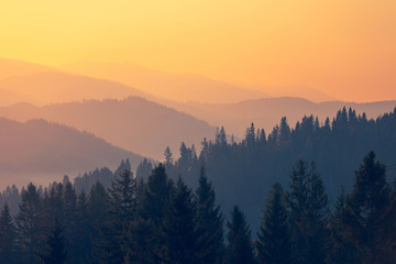 Majestic autumn scenery of foggy valley at Carpathian mountain range at early morning sunrise. Beautiful tonal perspective with spruce trees covered mountains. Fototapete