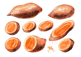 Whole and cut Raw sweet potato batat set. Watercolor hand drawn illustration isolated on white background