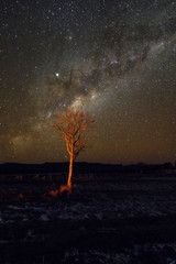 Cloudless starlit night sky with Milky Way and bright stars with firelight and a tree as panorama view for wallpaper and copy space