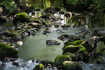 Stream with mossy stones